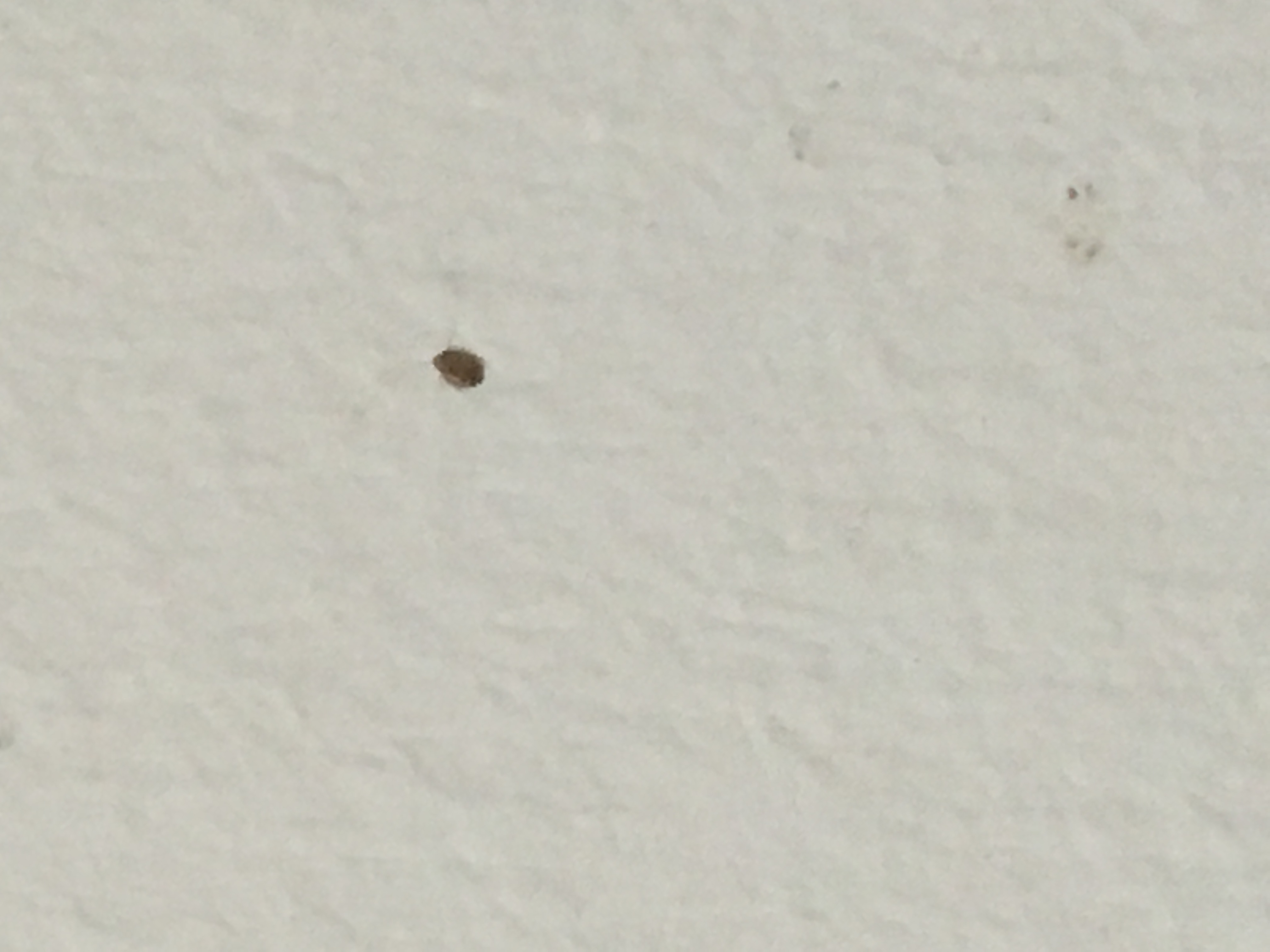 Tiny Insects Found On Wall Page 1