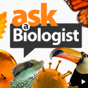AskABiologist If you have a biological question (that isnt homework) why not ask a team of professional biologists to help find an answer?